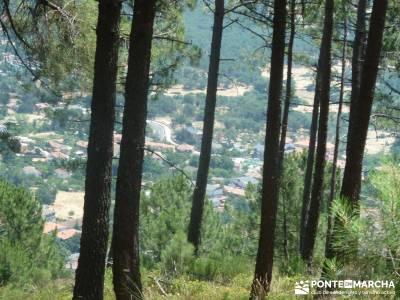 Pinares de Piedralaves;rutas en la pedriza la horizontal caminatas